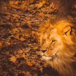 Leo y el amor: relaciones especiales y duraderas