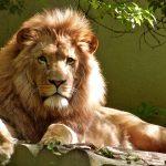 Leo en la vida: todo lo que debes saber sobre ellos